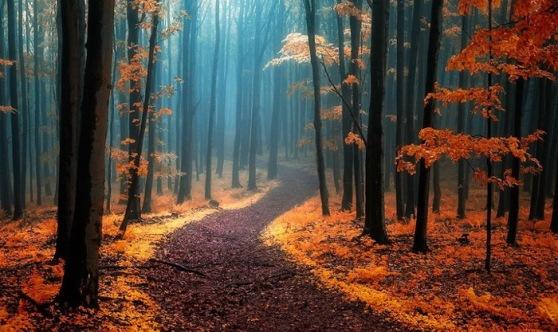dreamlike-autumn-forests-janek-sedlar-12