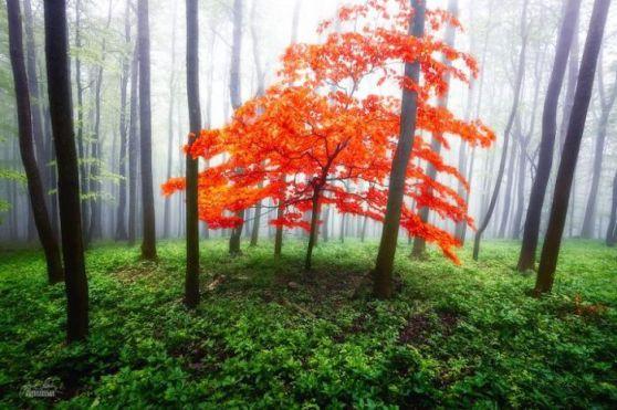 dreamlike-autumn-forests-janek-sedlar-14