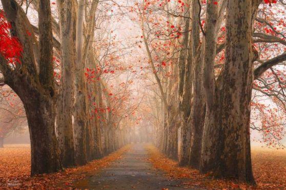 dreamlike-autumn-forests-janek-sedlar-39