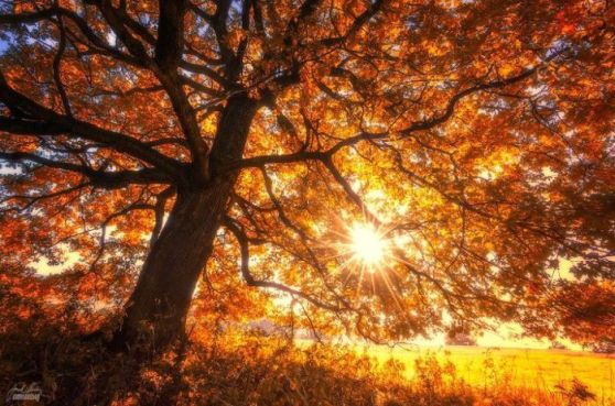 dreamlike-autumn-forests-janek-sedlar-8_